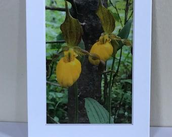 Yellow Lady Slipper 4x6 print