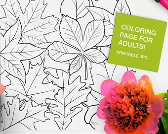 Relaxing Adult Color Therapy Art Therapy Meditation Teens And Children Calming Succulents And Cacti Coloring Book Anti-Stress And Mindfulness Coloring for Adults Anti-Anxiety
