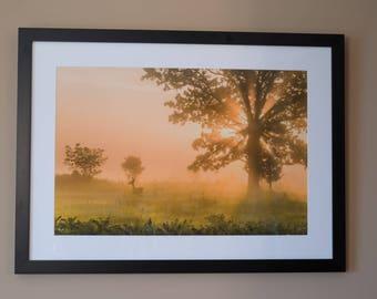 Pastoral Dream--Framed Print