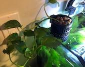 Hanging hydrodynamic planter for rimless fish tank.