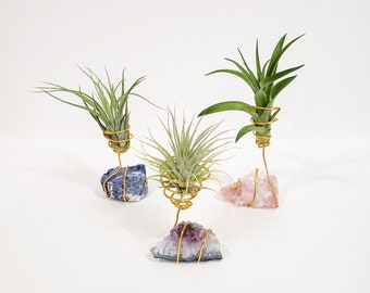 Mother/'s Day Gift Mom/'s Surprise Gift  Special Air Plant Gift. Best Mom Ever Gift Air Plant on Rose Quartz Gemstone  Air Plant Gift
