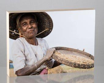 Riz Farmer, Myanmar, monté sur panneau de bois