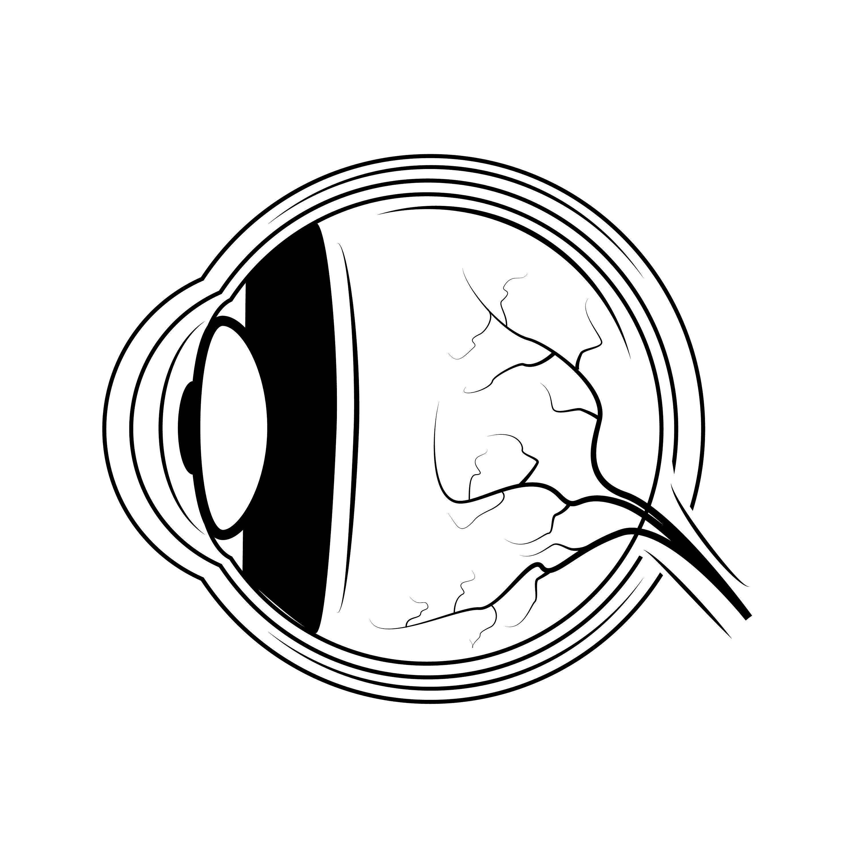 Anatomie Augensymbol SVG Menschliches Auge Augapfel | Etsy
