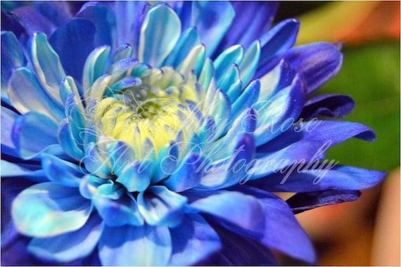 Blue flower with yellow centernature photographyhome decor etsy image 0 mightylinksfo