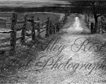 Path through the Field in Black and White/Home Decor  Wall Art