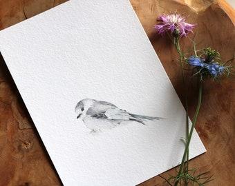 Little Grey Jay Bird Fine Art Print