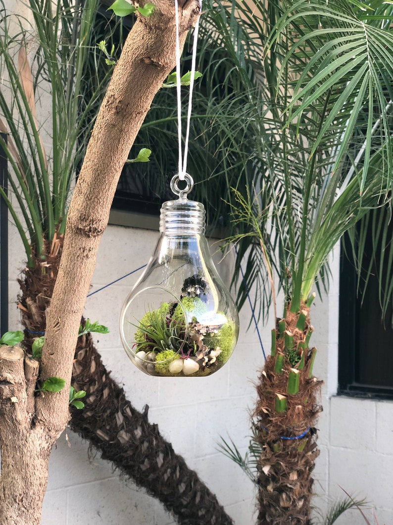 Hanging Glass Light Bulb Terrarium