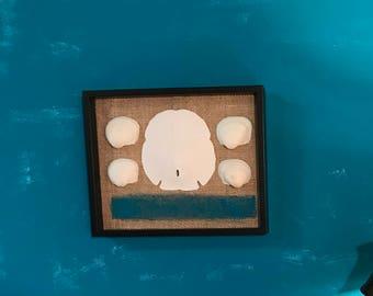 Seashell Shadow Box, Sand Dollars Framed, Sand Dollar Wall Hanging