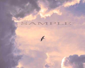 Limited edition Fine art photography, cloud scape, wildlife, Pelican flight.