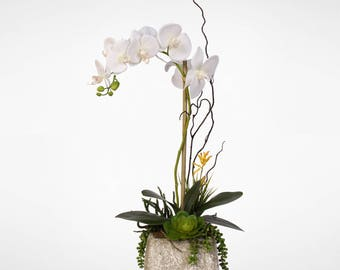 Real Touch Phalaenopsis Silk Orchid with Succulents in a Cement Pot #2A