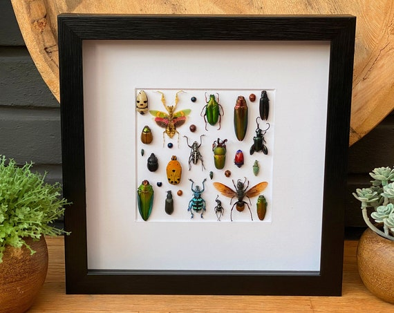 Insect art composition #9, Box Frame taxidermy entomology nature, beauty insect taxidermy photography