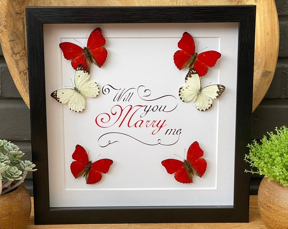 Will you marry me butterfly frame, insect Butterfly Box Frame taxidermy entomology nature, beauty insect taxidermy photography