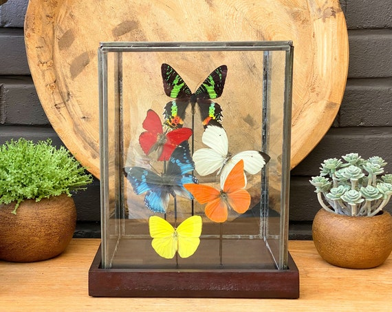 Glass display with mixed butterflies, taxidermy, entomology, bats