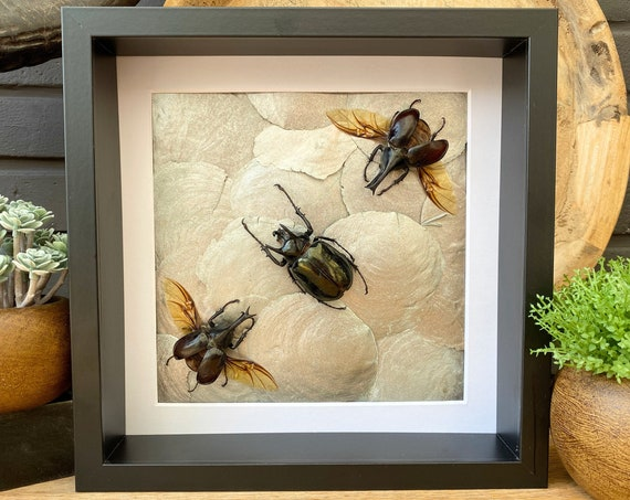 Art frame with real Camera shells Taxidermy,art,birthday gift,Gift for friend, entomology