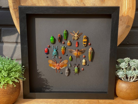 Insect art composition #10, Box Frame taxidermy entomology nature, beauty insect taxidermy photography