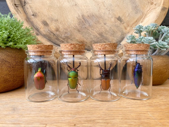 Set of 4 x mini bell jar with insects.