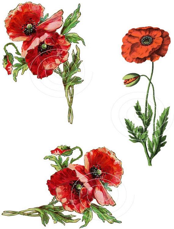 Vintage Botanical Clipart Poppy Flowers Red Poppies Digital Etsy