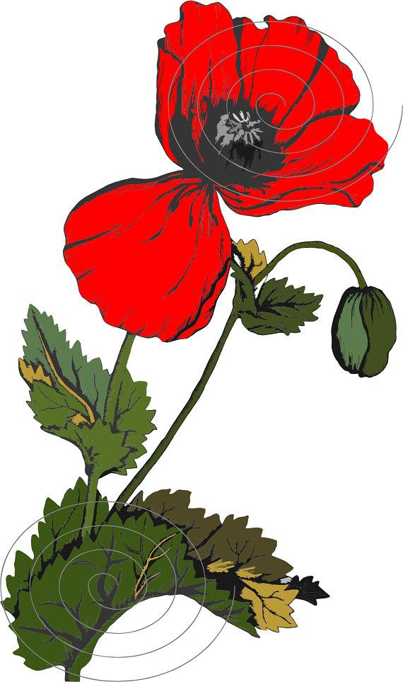 Poppy clipart vintage botanical clipart poppy flowers red etsy image 0 mightylinksfo