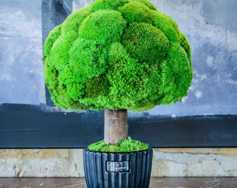 Preserved moss pole Natural house living plant Sphere moss tree Home plant decor