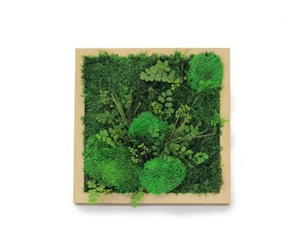 Preserved Flat and Pole Moss Picture with Preserved Plants (dark)  ~ Moss Wall Art ~ Real Preserved Moss ~ Green Wall Art ~ Green Decor