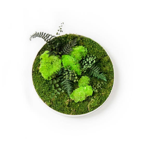 Preserved Moss And Plant Circle Picture Moss Wall Art Real Etsy