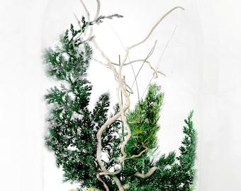 Preserved plants under glass dome Botanical art Long lasting Indoor plants composition Bell jar flowers decor