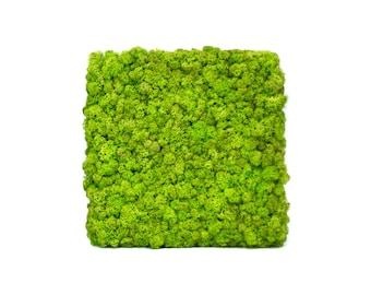 Scandinavian natural moss picture
