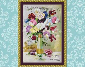 Sweet Pea Cross Stitch Pattern, Vintage Seed Packet