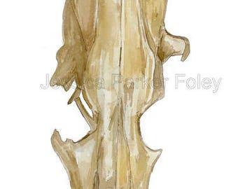 Original Watercolor Study of Skull