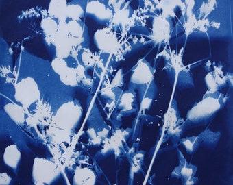 Cyanotype art print