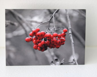 Red Berries Greeting Card, Flower Card, Red Berries, Berry Card, Berry Art, Red Berry Art, Red Card