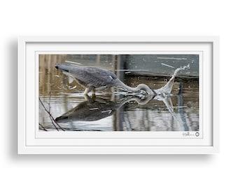 Natures Reflection - Grey Heron, Wildlife Photography Print