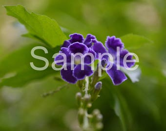 Purple Flower 5x7 Photograph