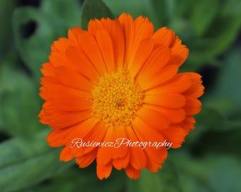 Flower, Macro Lens, Orange, Digital Print, Photography