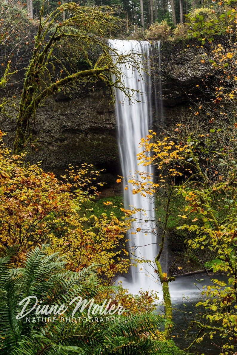 Home wall decor. South Falls waterfall photo Offering Nature Photography in Prints Canvas and Metal Art Silver Falls State Park Oregon