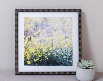 Yellow Flower Field Wall Art, Framed Print, Photography