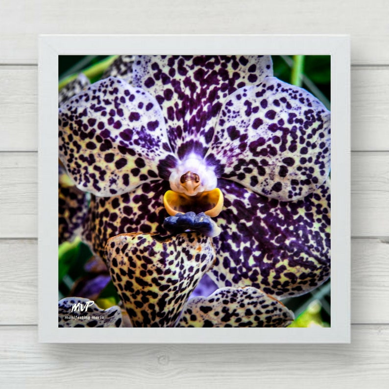 Laughing orchid image 0