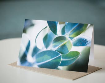 Tallerack mallee eucalyptus - Australian native flora greeting gift card
