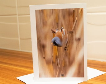 Bearded Tit Greetings Card by Gemma Woodford