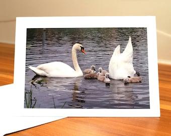 Mute Swan Family Greetings Card by Rita Basto