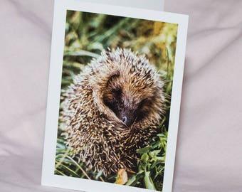 Hedgehog Photo Card - Blank Inside Cute Greetings Card - Photography