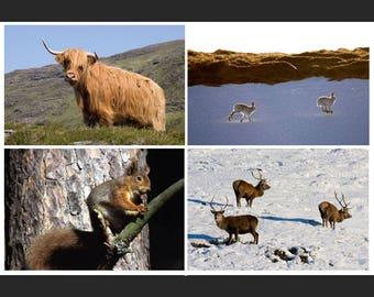 Set of 4 Greetings Cards - Scottish Animals Design Blank Inside Photo Card - Photography