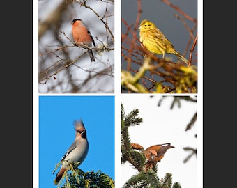 Set of 4 Greetings Cards - Passerines Design Blank Inside Birds of Prey Photo Card - Photography