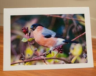 Bullfinch Greetings Card by Rebecca Dickson