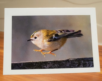 Goldcrest Greetings Card by Rebecca Dickson