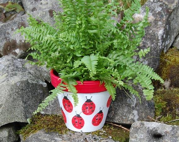 Red Ladybirds Ladybug Terracotta Flower Plant Pot, Garden Gift, Housewarming, Decor, Planter, Gardener, Pots, Gardening, planting