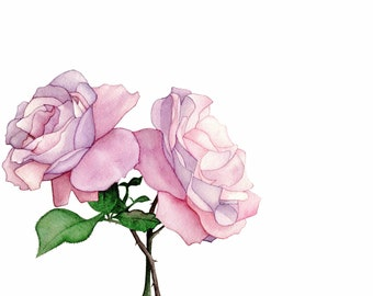 Roses - Fine Art Print of an Original Watercolour Painting