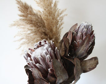 Dried flower bunch, Protea Lady Di and Pampas grass