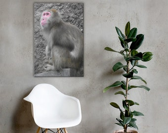 Japanese Snow Monkey Canvas