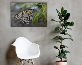 Tree Nymph Butterfly Canvas